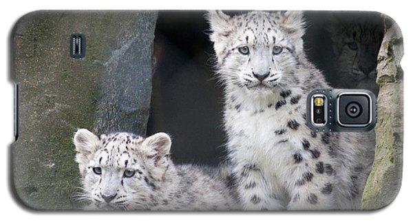 Snow Leopard Cubs Galaxy S5 Case
