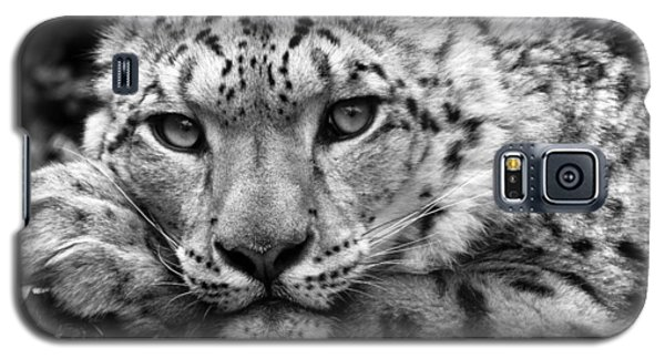 Snow Leopard In Black And White Galaxy S5 Case