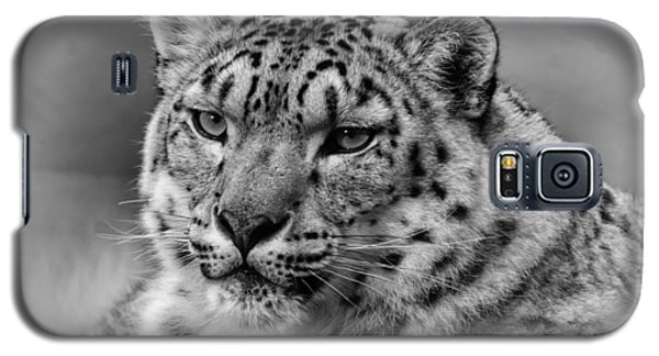 Galaxy S5 Case featuring the photograph Snow Leopard Portrait by Chris Boulton