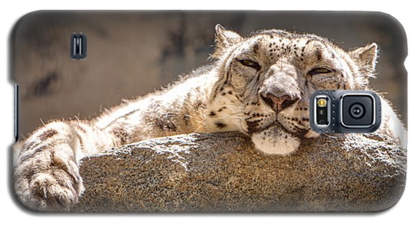 Snow Leopard Relaxing Galaxy S5 Case