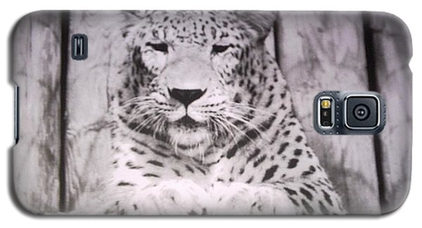 White Snow Leopard Chillin Galaxy S5 Case by Belinda Lee