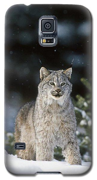 Snow Lynx Galaxy S5 Case