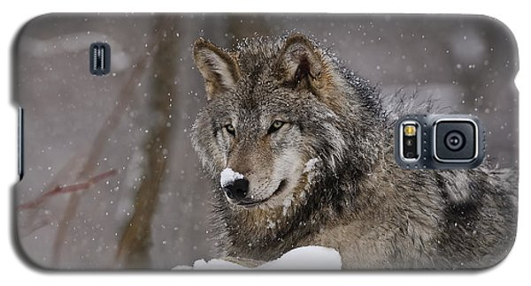 Snow Nose Galaxy S5 Case by Wolves Only