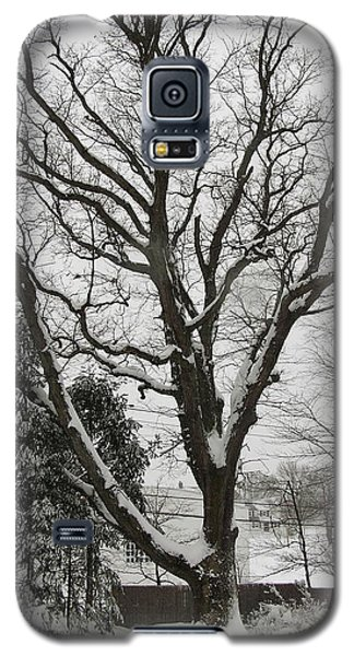 Snow Oak Galaxy S5 Case by John Wartman