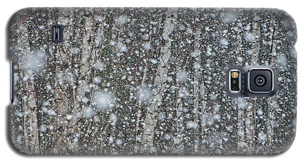Snow On Birch  Galaxy S5 Case