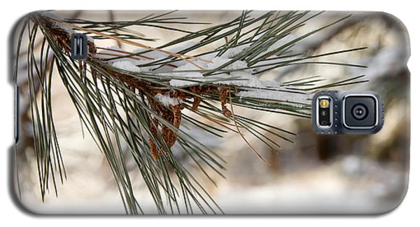 Galaxy S5 Case featuring the photograph Snow Pine by Courtney Webster