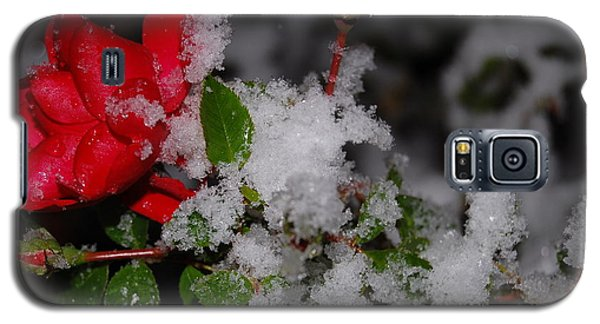 Galaxy S5 Case featuring the photograph Snow Rose by Mim White
