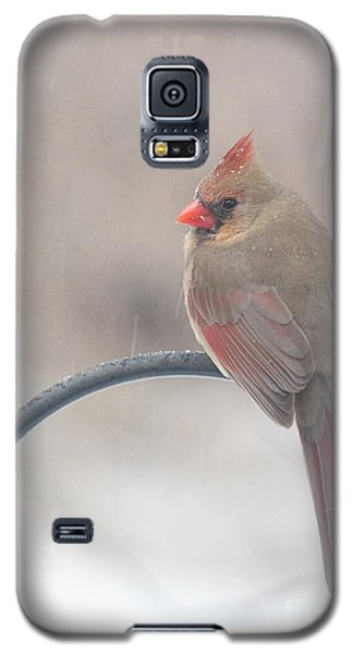 Snow Shower Galaxy S5 Case by Kay Pickens