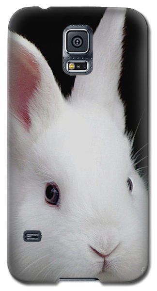 Snow White Galaxy S5 Case by Living Color Photography Lorraine Lynch
