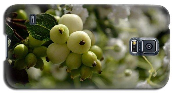 Snowberries Galaxy S5 Case