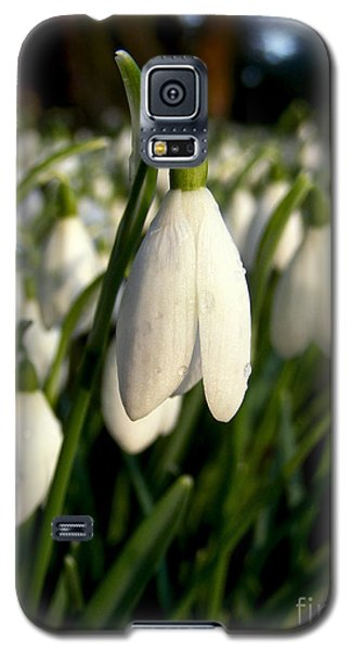 Galaxy S5 Case featuring the photograph Snowdrops by Nina Ficur Feenan
