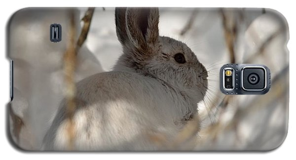 Snowshoe Hare Galaxy S5 Case by James Petersen