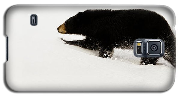 Snowy Bear Galaxy S5 Case