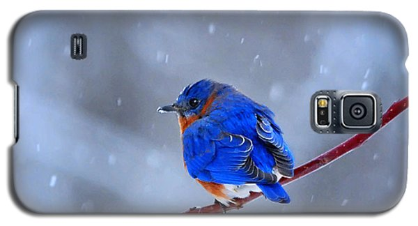 Galaxy S5 Case featuring the photograph Snowy Bluebird by Nava Thompson