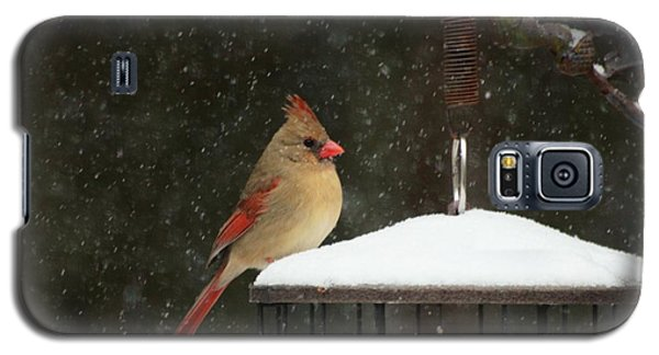 Snowy Cardinal Galaxy S5 Case by Benanne Stiens