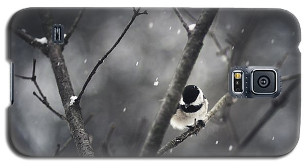 Snowy Chickadee Galaxy S5 Case