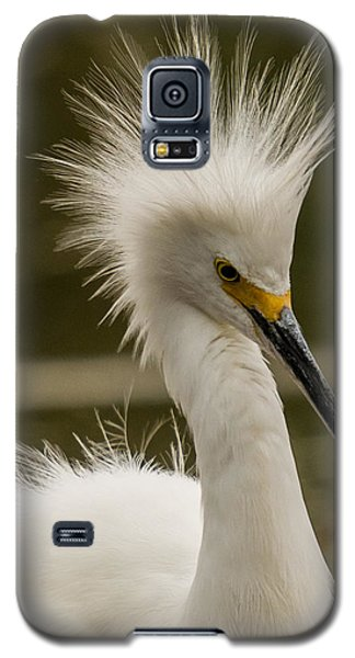 Snowy Egret Display Galaxy S5 Case