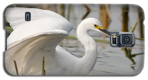 Galaxy S5 Case featuring the photograph Snowy Egret by Doug Herr