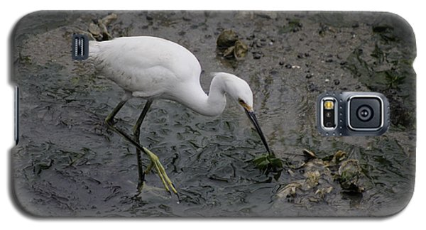 Galaxy S5 Case featuring the photograph Snowy Egret Feeding by Jeanne Kay Juhos