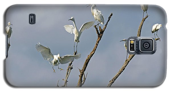 Galaxy S5 Case featuring the photograph Snowy Egret Inn by Olivia Hardwicke