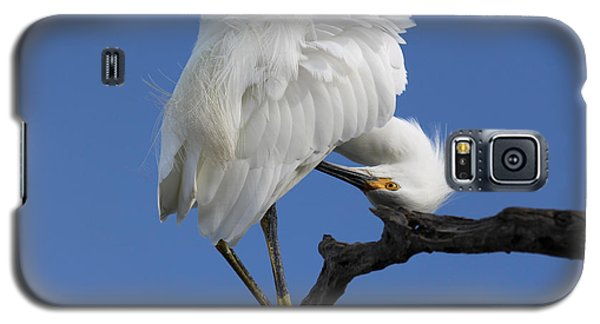Galaxy S5 Case featuring the photograph Snowy Egret Photograph by Meg Rousher