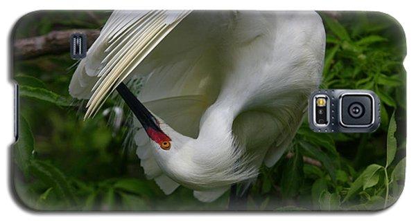 Snowy Egret Preening Galaxy S5 Case