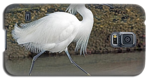 Galaxy S5 Case featuring the photograph Snowy Egret Strutting by Stephen  Johnson