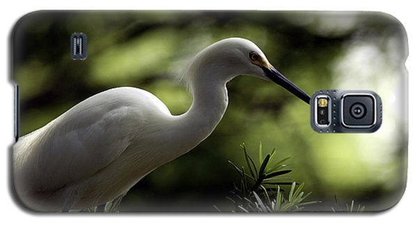 Galaxy S5 Case featuring the photograph Snowy Egret by Travis Burgess