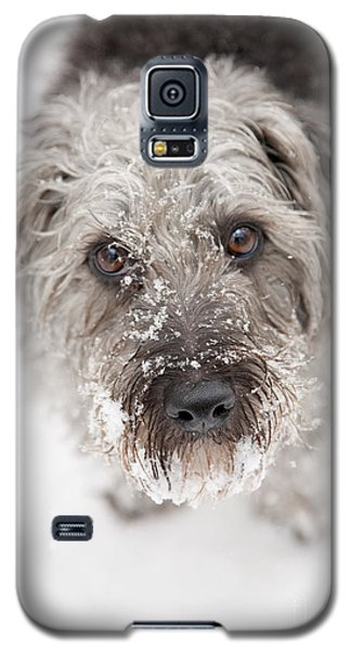 Snowy Faced Pup Galaxy S5 Case by Natalie Kinnear