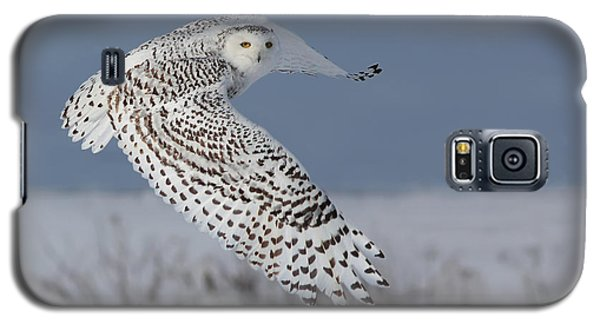 Snowy In Action Galaxy S5 Case by Mircea Costina Photography