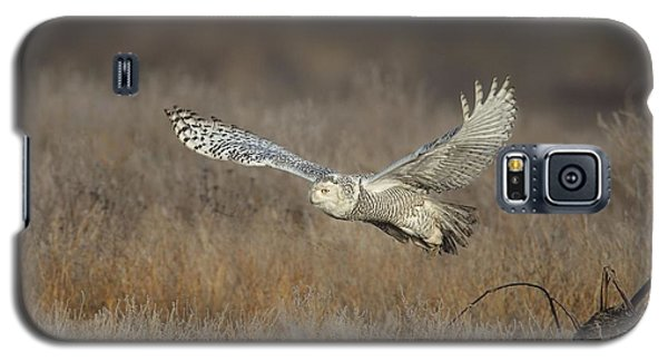 Galaxy S5 Case featuring the photograph Snowy On The Wing by Daniel Behm