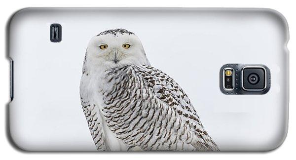 Snowy Owl 2014 1 Galaxy S5 Case