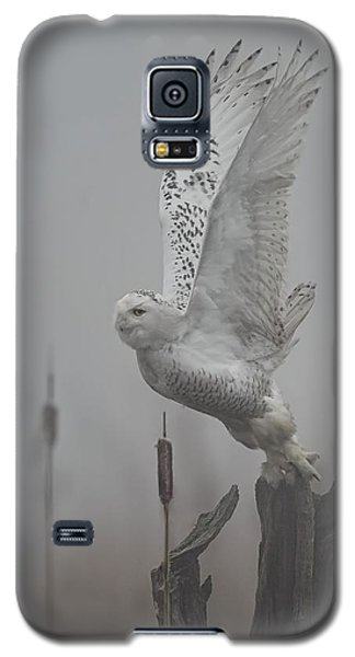 Snowy Owl Blastoff Galaxy S5 Case by Daniel Behm