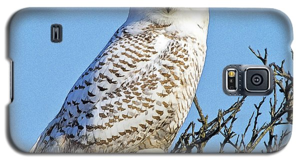 Galaxy S5 Case featuring the photograph Snowy Owl by Constantine Gregory