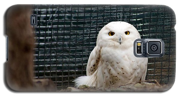 Galaxy S5 Case featuring the photograph Snowy Owl by Courtney Webster