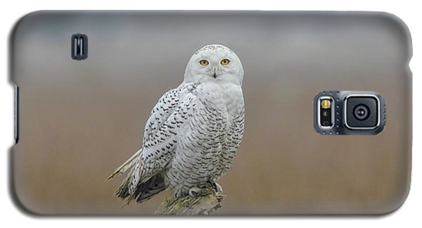 Galaxy S5 Case featuring the photograph Snowy Owl  by Daniel Behm