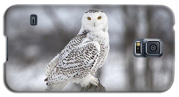 Snowy Owl Galaxy S5 Case by Eunice Gibb
