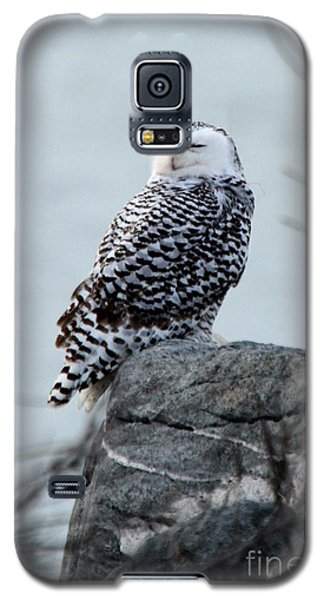 Snowy Owl I Galaxy S5 Case by Butch Lombardi