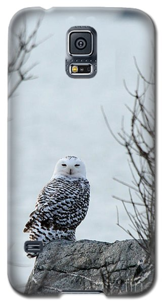 Snowy Owl II Galaxy S5 Case by Butch Lombardi