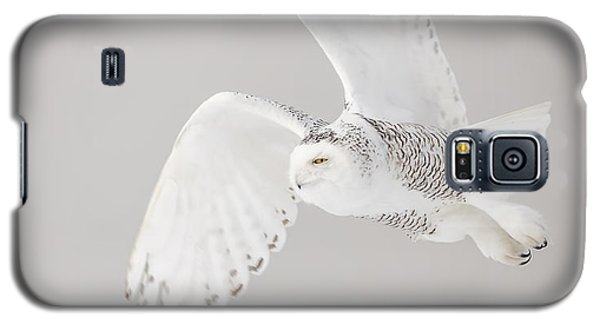 Snowy Owl In Flight 4 Galaxy S5 Case