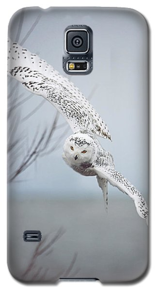 Wildlife Galaxy S5 Case - Snowy Owl In Flight by Carrie Ann Grippo-Pike