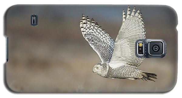 Galaxy S5 Case featuring the photograph Snowy Owl In Flight by Daniel Behm