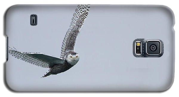 Snowy Owl In Flight Galaxy S5 Case by Gary Hall