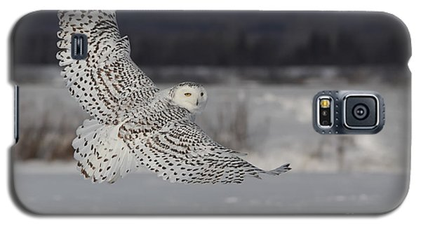 Snowy Owl In Flight Galaxy S5 Case by Mircea Costina Photography