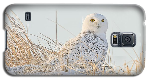 Snowy Owl In The Snow Covered Dunes Galaxy S5 Case