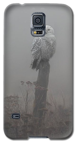 Galaxy S5 Case featuring the photograph Snowy Owl  In The Mist by Daniel Behm