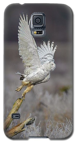 Galaxy S5 Case featuring the photograph Snowy Owl Liftoff by Daniel Behm