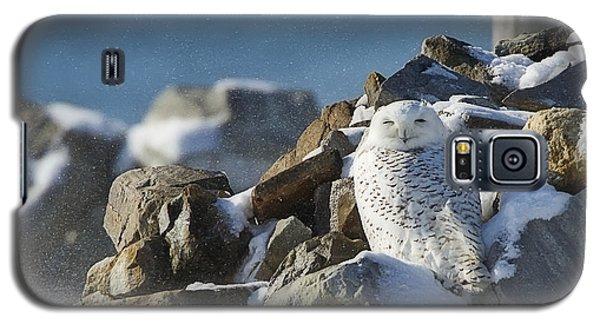 Snowy Owl On A Rock Pile Galaxy S5 Case
