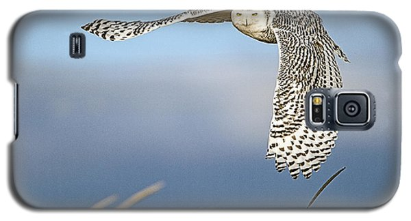 Snowy Owl Over The Dunes Galaxy S5 Case