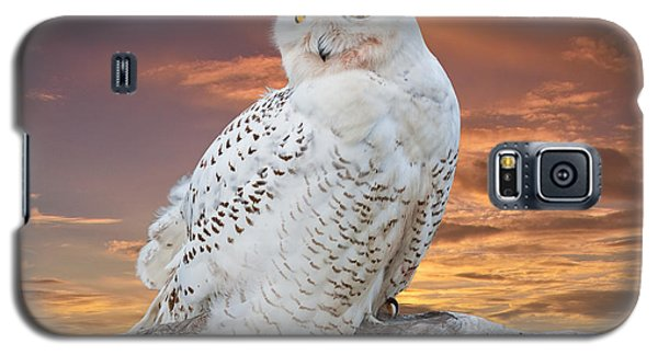 Snowy Owl Perched At Sunset Galaxy S5 Case